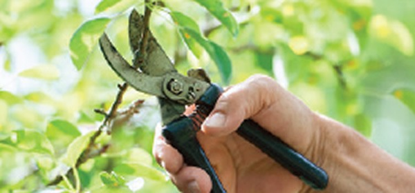 hurricane-pruning